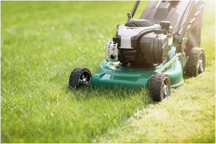 Maintaining the Lawn in The Cold Weather